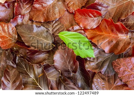 pile of leaves, one standing out from the crowd