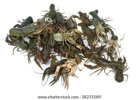 Pile of live crayfishes isolated on the white background