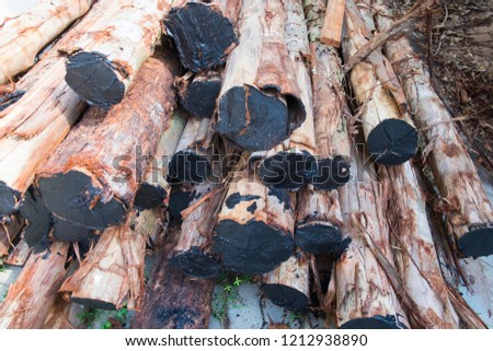 Pile of many brown timber. Raw of timber.
