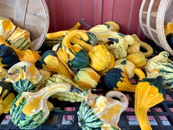 Pile of multi-colored gourds on a table with bushel baskets and a red background