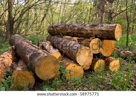 pile of pine tree logs in a forest