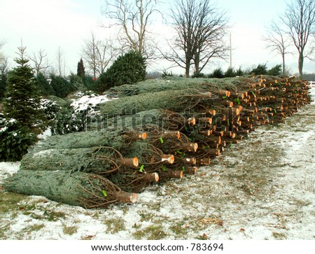 pile of pine trees bagged for Christmas