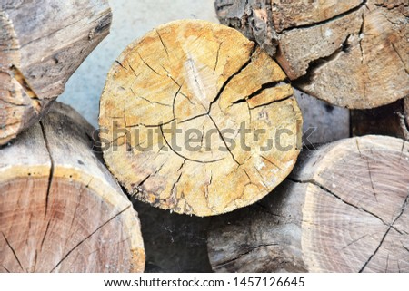 Pile of round wood. Cut of a tree with textured surface, selective focus. Natural wooden material for building. Stuck of circle timber. Timber blanks on sawmill. Cut tree trunks. Hardwood