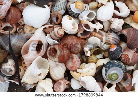 Pile of the shells of molluscs on the beach at low tide Foto stock ©