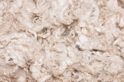 Pile of unprocessed high quality New Zealand merino wool