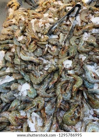 Pile of White leg shrimp or Pacific white shrimp or king prawn freezing with ice in supermarket. #1295786995
