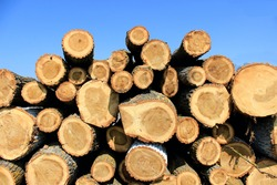 Pile of wood after deforestation. Tree logs. Dry chopped firewood logs stacked up on top of each other. Brown poplar logs.