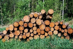 Pile of wood after deforestation. Tree logs lie on the ground in the forest. Dry chopped firewood logs stacked up on top of each other in Bavaria, Germany. Brown logs with green grass and trees.