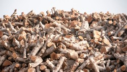 Pile of wood logs for fire