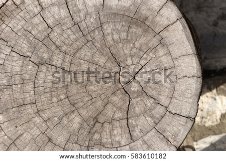 Pile Of Wood Logs Storage For Industry. Section Plane Of Natural Wood Log  Background.