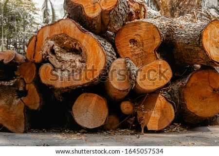 Pile of wood that is cut on the ground (Pile of wood, Pile of wood in the backyard), Piled tree, Poplar and log yard.