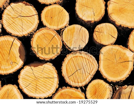 Pile of wooden logs