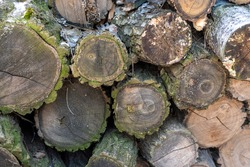 Piled eucalyptus tree logs in forest. Stacks of cut wood. Wood logs, timber logging, industrial destruction