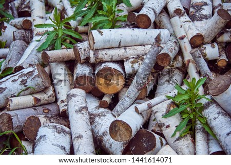 Piled up a pile of birch wood, grass sprouted between them.