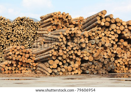 Piles of cut wood at timber mill
