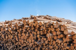 Piles of Douglas Fir Logs in a log yard ready to be milled through a sawmill in Canada to produce softwood lumber
