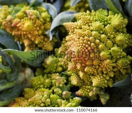 Piles of fractal spiral shaped romano Broccoli at the Farmers market