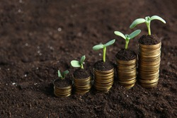 Piles of gold coins in the ground and green fresh sprouts. Cash income growth concept.