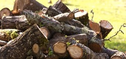 Piles of ready cut wet wood, laying on the grass. The wood is cherry wood and is piled waiting to be stacked and dried