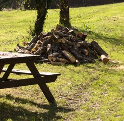 Piles of ready cut wet wood, laying on the grass. The wood is cherry wood and is piled waiting to be stacked and dried. A garden bench in the foreground.