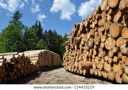piles of wooden logs under blue sky