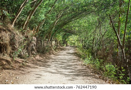 Shutterstock Pilgrim trail between Caldas de Reis and Padron on the Camino de Santiago trail, Galicia, Spain