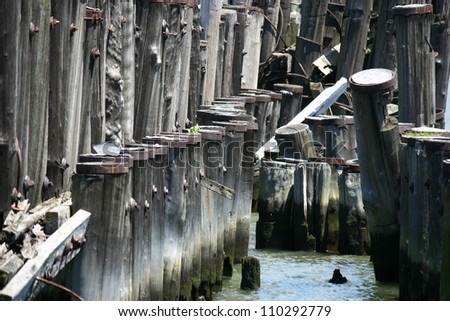 Pilings from an old unused pier on a river