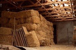 Pilled up straw-bales in and old rural cellar. Beside, some wood planks and a stick. a barrel can be seen in the right.