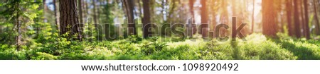 pine and fir forest panorama in spring. Pathway in the park #1098920492