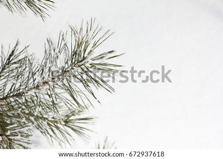 Pine branch in hoarfrost against the background of snow #672937618