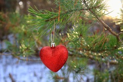 Pine branch in snow close up. Snow fir branch in forest. Red heart in snow. Red heart ballon on branch. Christmas tree decoration. Christmas snow tree
