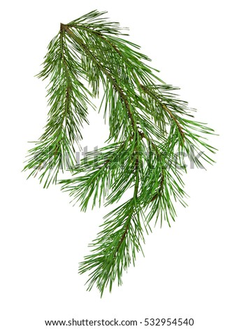 Pine branch isolate on white background without shadows. Close-up. Christmas. Nature. #532954540