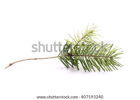 pine branch isolated on white background #407593240