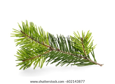 pine branch isolated on white background #602143877
