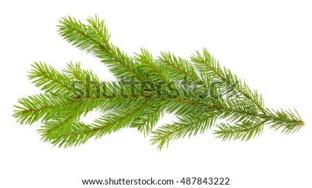 Pine branch isolated on white background. Top view. #487843222