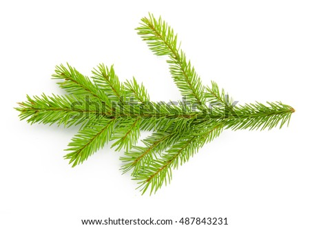 Pine branch isolated on white background. Top view. #487843231