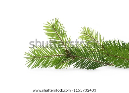 Pine branch, natural decoration isolated on white background #1155732433
