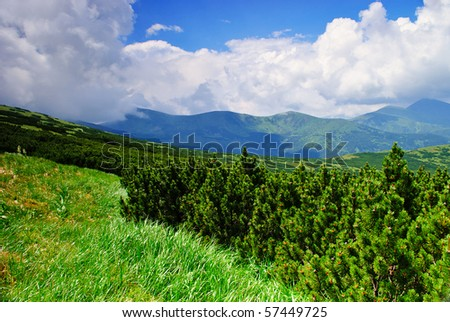 Pine bush in Carpathians witn clear blue sky