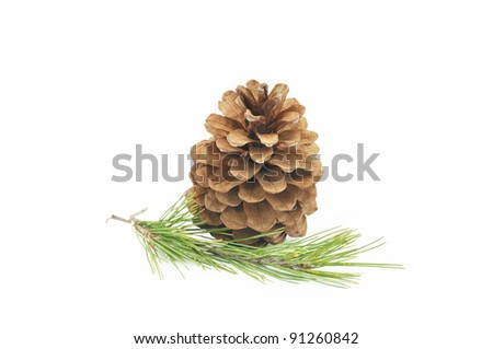 Pine Cone Branch isolated on White Background