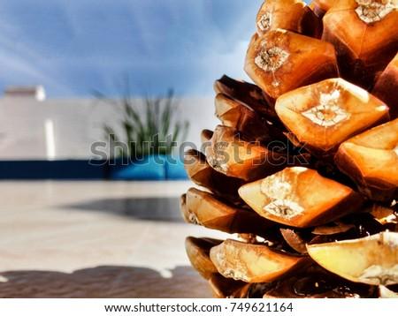 Pine cone close up #749621164