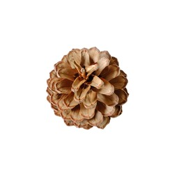 Pine cone from top view, blooming, isolated, white background