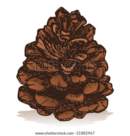 Pine Cone Icon Isolated On White Background Sketch Style ...