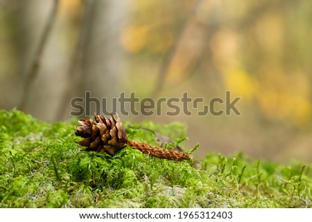 Pine cone in moss eaten by squirrel in front of a sunlit forest blurred in the background Stock photo ©