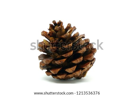 Pine cone isolated with white background
