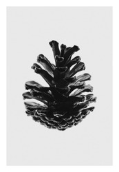 Pine cone macro - The beauty of large aperture -fine art photography