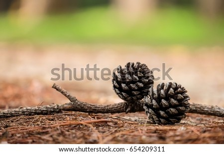 pine cone on the ground with blurred background. #654209311