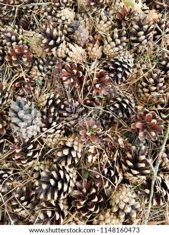 pine cone pine cones pine needles #1148160473