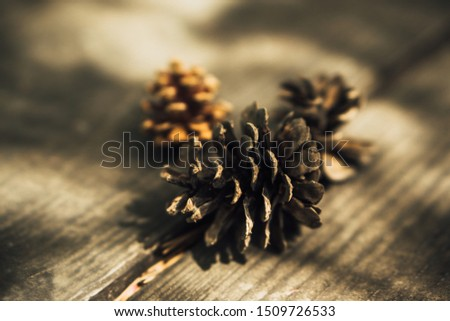 pine cone,pine seed,pine cone background #1509726533