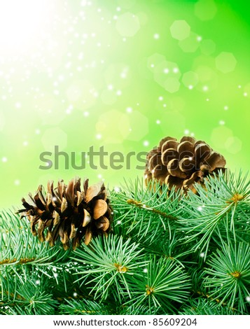pine cones and fir-tree close-up