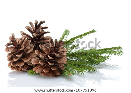 Pine cones and needles, close up